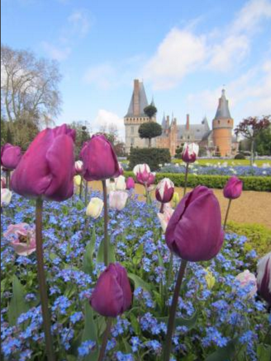 tulipes-chateau-credits-photos-tripadvisor